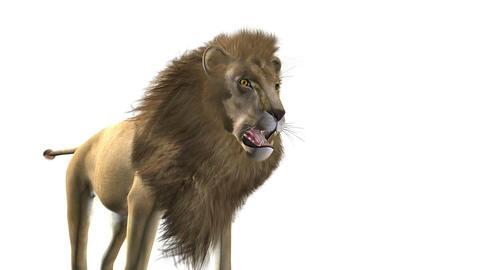 ライオン Animation