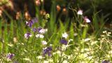 Spring Landscape in Showa Kinen Park,Tokyo,Japan_2 Footage