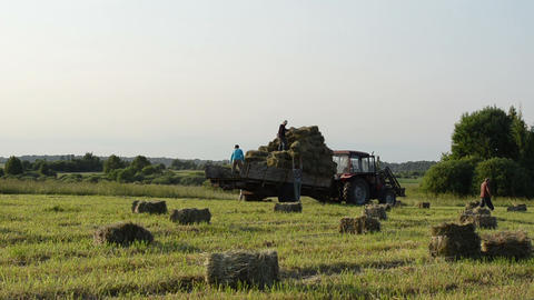 Tractor in field and farmer people load it with hay bales Footage