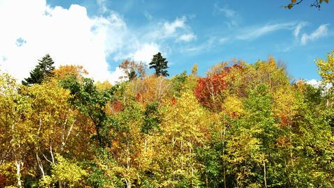 autumn trees in Kurobe Footage