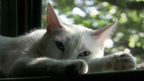 Beautiful Cat Sleeping In Window Stock Video Footage