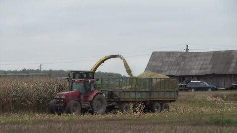 Combine harvester load ripe corns into tractor trailer Footage