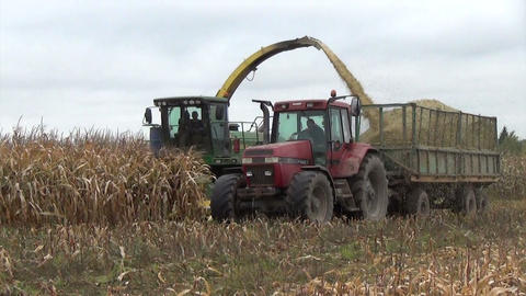 corn field heavy machinery gather autumn maize corn harvest Footage