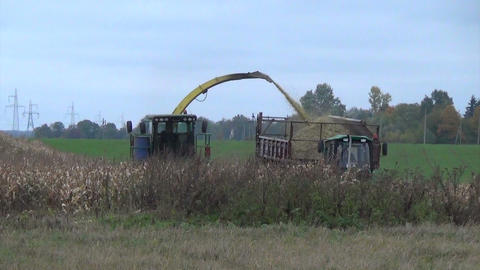 annual maize harvest tractor cuts pour grain into trailer Footage