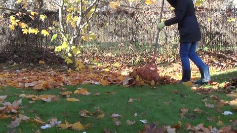 gardener rake in pile dry leaves seasonal autumn garden work Live Action