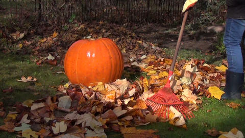 farmer with rake raking leaves in the garden along the pumpkin Footage
