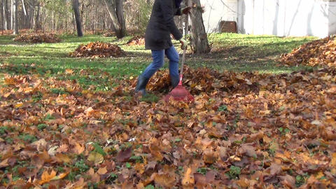 yard covered with dry leaves. Gardener raking leaves into pile Footage