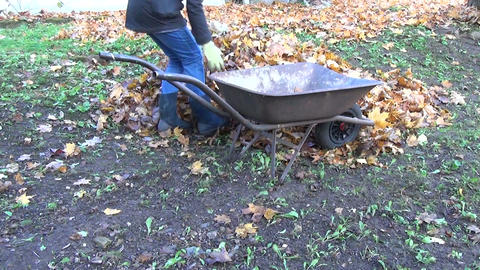 worker with wheelbarrow pile of dry leaves loading leaves hand Footage