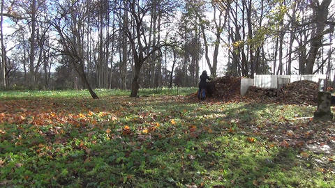 woman prepare compost from autumn leaves. Seasonal works Footage