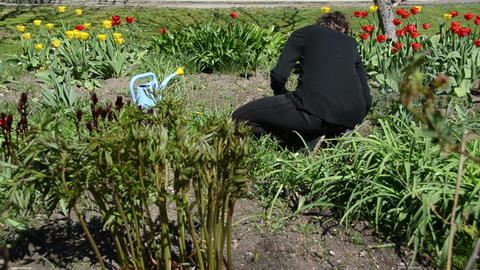 back of woman look after tulip flower beds in spring garden Footage