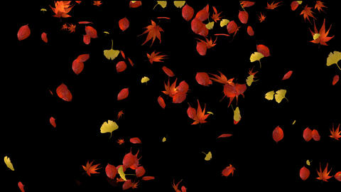 Colored leaves rain Animation