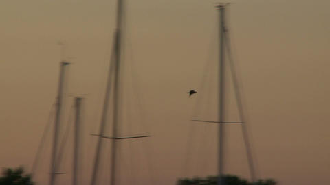 Following a bird's flight over boats at dawn (3 of 3) Footage