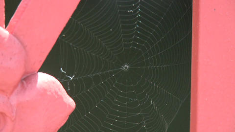 Amazing Spider web (1 of 1) Footage
