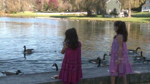 Little girls feeding ducks (3 of 7) Footage