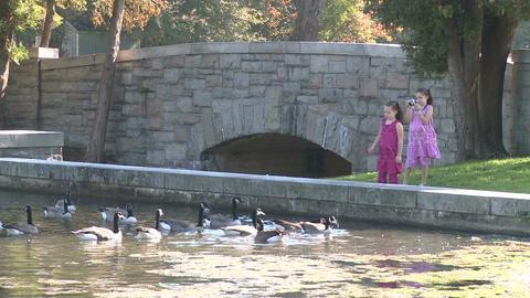 Little girls feeding ducks (6 of 7) Footage