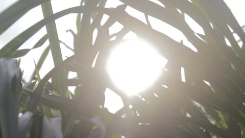 Sun Behind Shrub stock footage