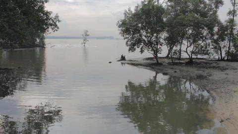 Swamp Footage