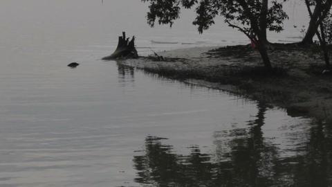 Swamp Close Up Footage