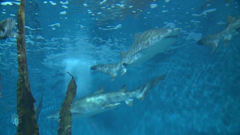 Majestic aquatic life (14 of 19) Live Action