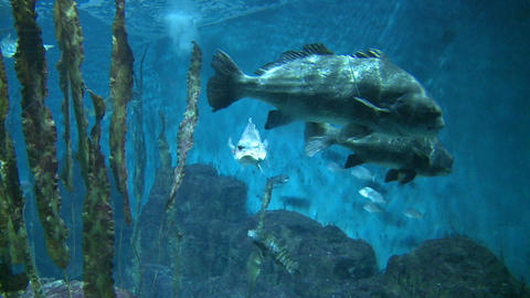 Majestic aquatic life (13 of 19) Live Action
