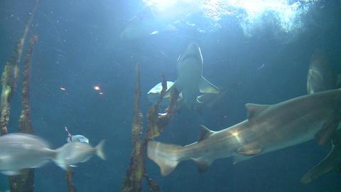 Majestic aquatic life (2 of 19) Live Action