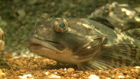 Up-close aquatic life (12 of 16) Live Action