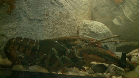 Up-close aquatic life (1 of 16) Live Action