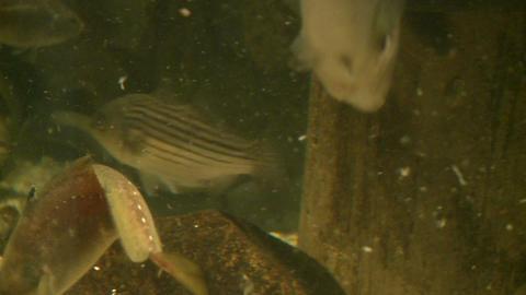 Up-close aquatic life (2 of 16) Live Action