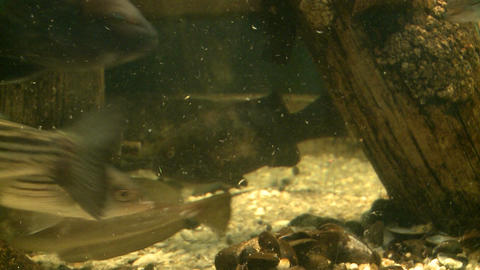 Up-close aquatic life (4 of 16), Live Action
