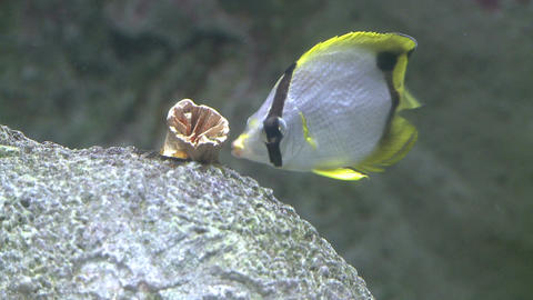 Undersea flora and fauna (20 of 28) Stock Video Footage
