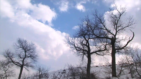 Tree And Clouds Timelapse 2 stock footage