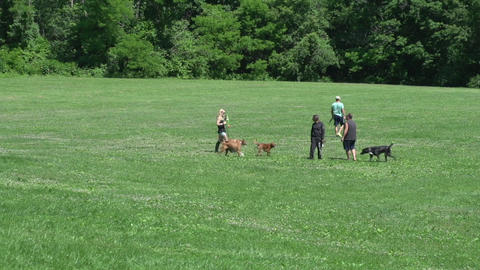 Dogs playing in a field (6 of 6) Footage