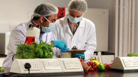 Scientists experimenting on food together Footage