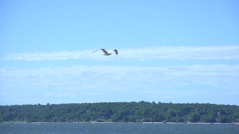 Seagull Over Water stock footage