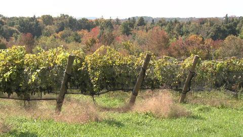Lush vineyards (2 of 4) Footage