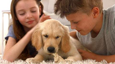 Happy siblings with their puppy at home Footage