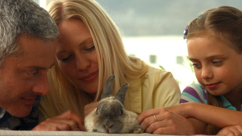 Happy family with pet rabbit Footage