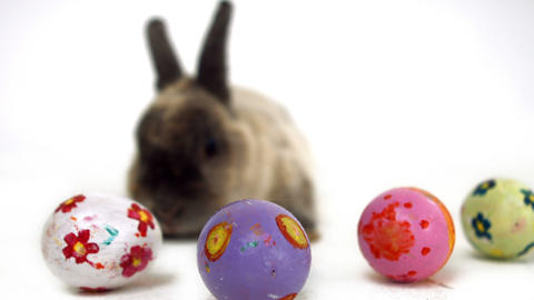 Easter bunny with colourful eggs Footage