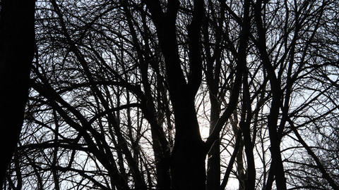 Sunset Behind Crazy Trees Stock Video Footage
