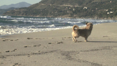 dog running and coming back slow motion Stock Video Footage