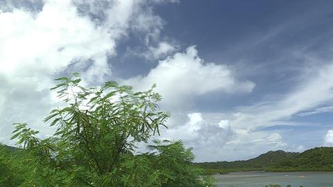 Summer landscape in Iriomote island,Okinawa,Japan Stock Video Footage