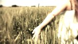 Hand running through wheat green field Freedom Landscape Footage