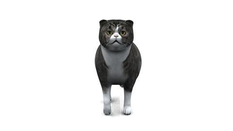 歩く猫 CG動画素材