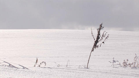 Snowfield and dried grass,in Biei,Hokkaido,Japan Stock Video Footage