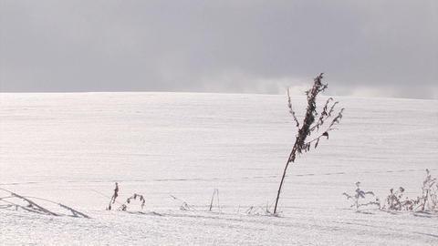 Snowfield and dried grass,in Biei,Hokkaido,Japan Stock Video Footage