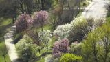 Beautiful Blossoming Springtime Trees Footage