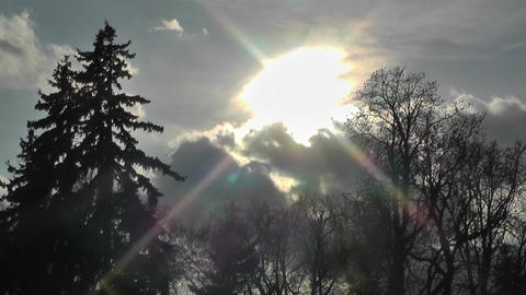 Springtime Trees and Clouds Sunset Timelapse 01 Stock Video Footage