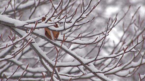 Snowfall on the tree in Mt.Hakkoda,Aomori,Japan_3 Stock Video Footage