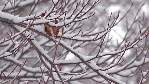Snowfall on the tree in Mt.Hakkoda,Aomori,Japan_3 Stock Video Footage