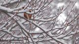Snowfall on the tree in Mt.Hakkoda,Aomori,Japan_3 Footage
